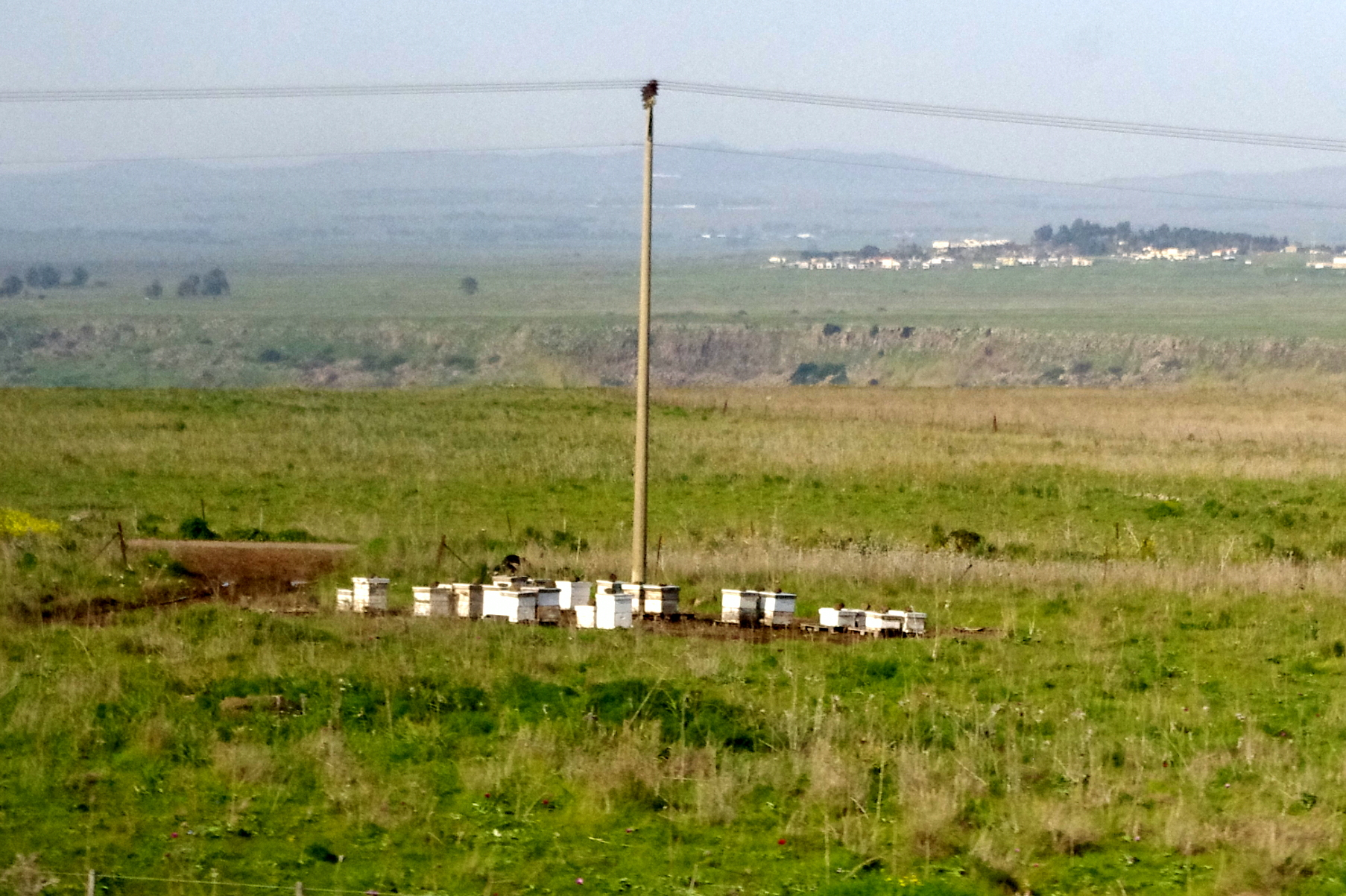Golan Heights Bee hives